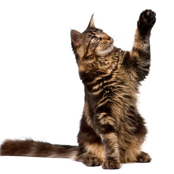 Best All Natural Cat Treats