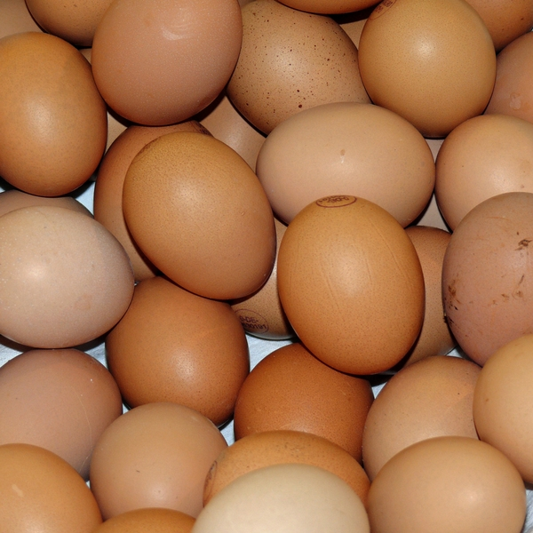 Can Dogs Eat Raw Eggs And How Is Best To Feed Them Vets All Natural